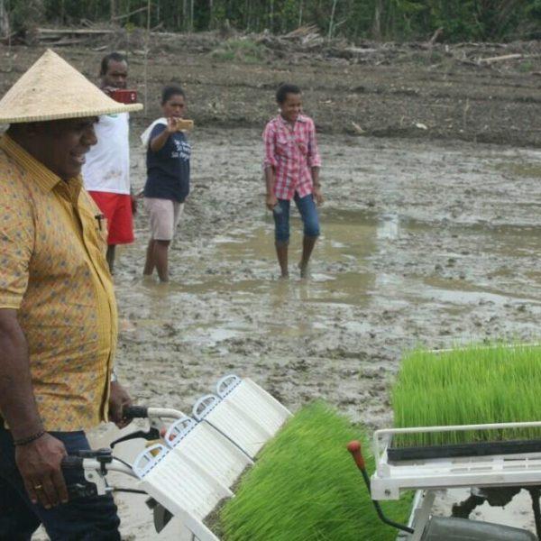 Tampak Kepala Dinas TPH Kabupaten Jayapura, Adolf  Yokhu, SP, MM sedang melakukan traning bagi petani putra daerah cara menggunakan mesin tanam di Kampung Berap Distrik Nimbokrang, belum lama ini.